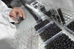 Wino kontrola jakości testowanie w nowożytnym laboratorium fotografia royalty free