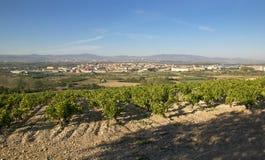 Wino kraju krajobraz Obrazy Royalty Free