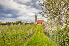 Wino kraju krajobraz w Edenkoben okręgu Południowy wina Ro Zdjęcie Royalty Free