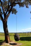 Wino kraju nelsonu winnica Nowa Zelandia Obraz Royalty Free