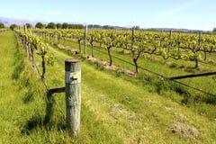 Wino kraju nelsonu winnicy gronowy winograd Nowa Zelandia Obraz Stock