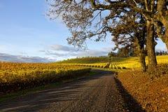 Wino kraju piękno Zdjęcie Royalty Free
