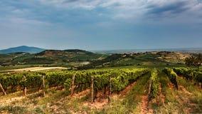 Wino region w lecie Fotografia Royalty Free