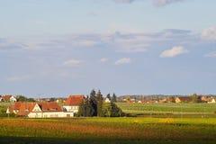 wino wioski. Fotografia Royalty Free
