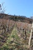 Winogradów jardy zdjęcia stock