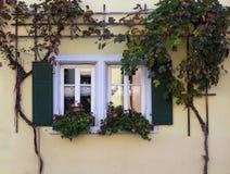winogradów okno Zdjęcia Royalty Free