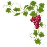 winograd ilustracja wektor