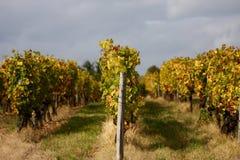 winograd Obrazy Royalty Free