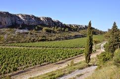 Winograd blisko Narbonne w Francja Fotografia Royalty Free