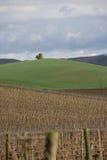 Winograd wewnątrz Eliminuje, Francja fotografia stock