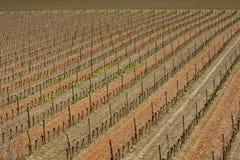 Winograd wewnątrz Eliminuje, Francja obraz stock