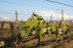 Winograd wewnątrz Eliminuje, Francja fotografia royalty free