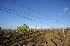 Winograd wewnątrz Eliminuje, Francja Zdjęcie Royalty Free