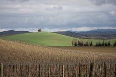 Winograd wewnątrz Eliminuje, Francja Obrazy Stock