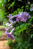 Winograd z menchia kwiatem obraz royalty free