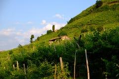 Winograd zakrywał wzgórza blisko Santo Stefano, Valdobbiadene Zdjęcia Stock