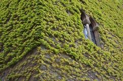 winograd zakrywająca ściana Obraz Royalty Free