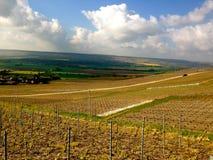 Winogradu jard w Campagne Obrazy Stock
