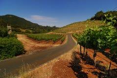 winogrady gronowi winogrady Fotografia Stock