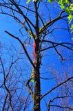 Winogrady i drzewa Obrazy Royalty Free