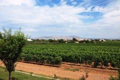 Winogrady i wzgórza Zdjęcie Royalty Free