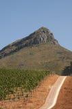 Winogrady r w czerwieni ziemi Zachodnim przylądku S Afryka Obraz Royalty Free