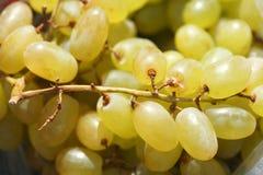 Winogrady, winnicy Obrazy Stock