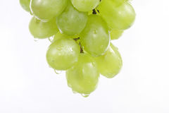 Winograpes01 Stock Images