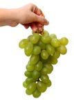 winogron ręki muszkatołowy biel Obraz Royalty Free