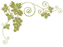 winogron wiązek liście Obrazy Stock