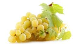 winogrona Obraz Royalty Free