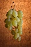 winogrona Obrazy Stock