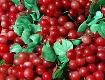 winogrona Fotografia Stock