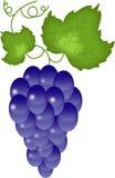 winogrona biały Ilustracja Wektor