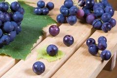 winogrona czerwoni Obraz Stock