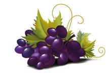 winogrona fiołkowi ilustracja wektor
