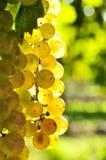 winogrona kolor żółty Obrazy Royalty Free