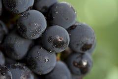 winogrona koronacyjni makro Obrazy Royalty Free