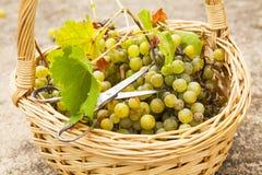 Winogrona koszykowi Zdjęcia Royalty Free