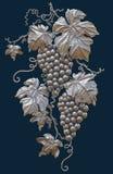 Winogrona na ciemnym tle odizolowywającym Obrazy Stock