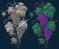 Winogrona na ciemnym tle odizolowywającym ilustracja wektor
