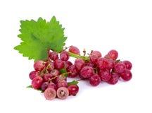 Winogrona odizolowywający dalej nad białym tłem zdjęcia stock