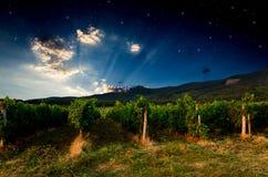 Winogrona pole Zdjęcie Stock