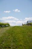 Winogrona pole na nieba tle w wiośnie Zdjęcie Royalty Free