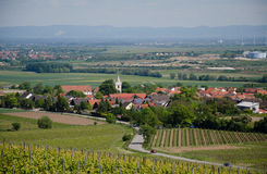 Winogrona pole na tle miasto w wiośnie Obrazy Royalty Free