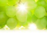 Winogrona przeciw słońcu Zdjęcie Stock