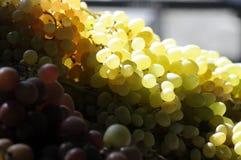 Winogrona przy rolnika rynkiem Obrazy Royalty Free