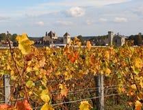 Winogrona przygotowywający podnoszącym w Burgundy, Francja Zdjęcia Stock