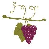 winogrona purpurowi Obraz Stock