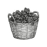 Winogrona w koszu royalty ilustracja